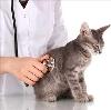 Ветеринарные клиники в Краснокаменске